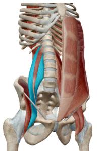 インナーマッスルは骨盤や背骨を支えています